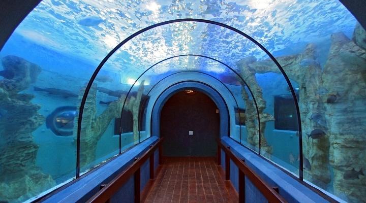 aquarium-720×539