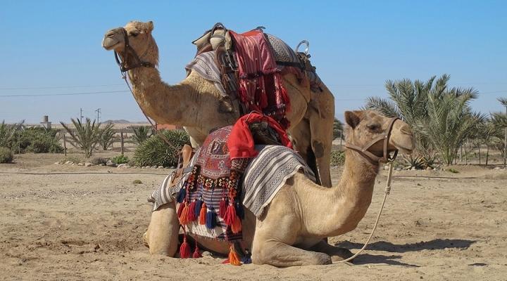 camel-riding-720×400
